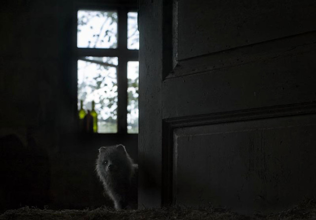 casa_abandonda_tomada_por_animales_03